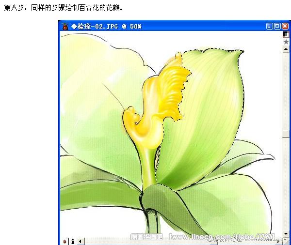 数码板绘制一朵美丽的百合花图片