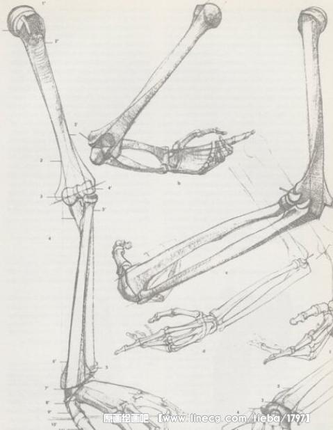 人物绘画解析【上肢结构】