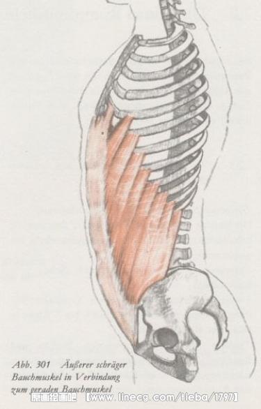 颈部结构示意图