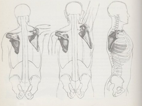人物绘制解析【躯干结构】图片